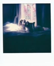 Polaroid  96 copy.JPG