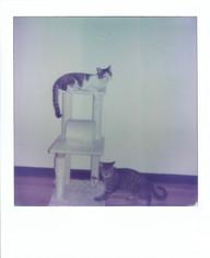Polaroid  149 copy.JPG