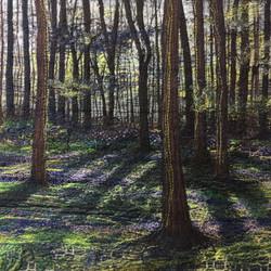 Stittenham Woods, Bluebells