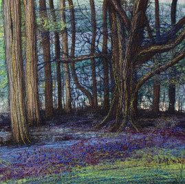 Bluebells at Alne II