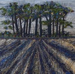 Copse of trees, Rudston
