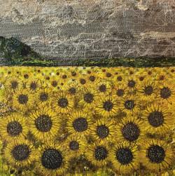 Sunflower Fields, Terrington