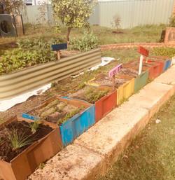 BPS Vegie Garden5