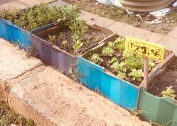 BPS Vegie Garden3