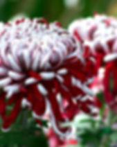 Lili Gallon 1.jpg