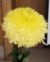 Yellow Phil Houghton 1.jpg