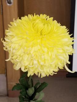 Yellow Phil Houghton