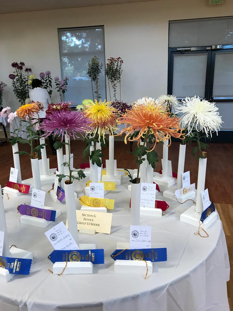 Best Anemone, Daybreak, 1st purple ribbon on the left, by Winnie Wang
