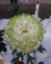 Zembla Lime.jpg