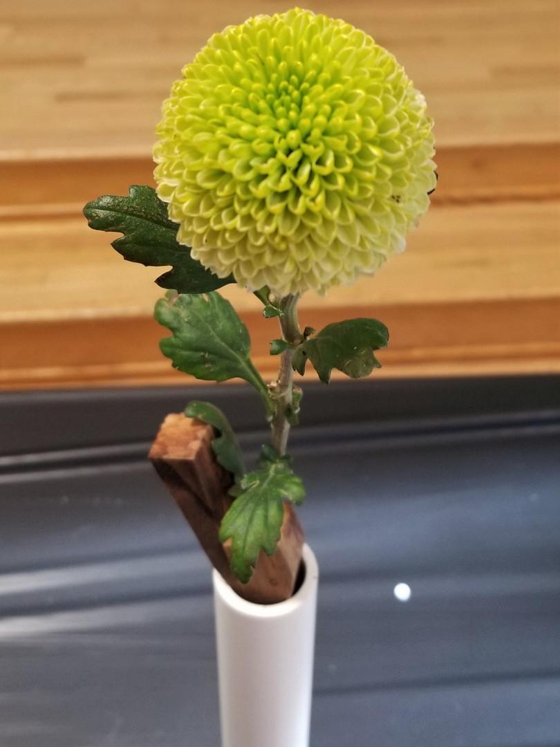 Best Pompom, Feeling Green, Best Novice Pompom, by Ken Wong