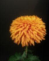 Honey Glow 1.jpg