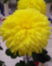 Yellow Symbol 1.JPG