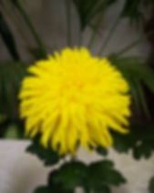 Yellow Symbol 2.JPG