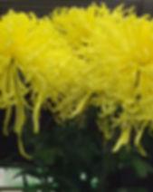 GoldenSplendor 1.jpg