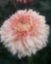 Peach Courtier 1.jpg