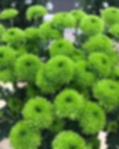 Palm Dark Green 1.jpg