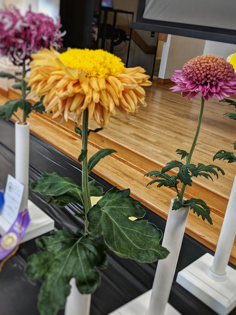 Best 3 Blooms, Daybreak, Edith Mechen, Yellow Flying Saucer, by Jeff MacDonald
