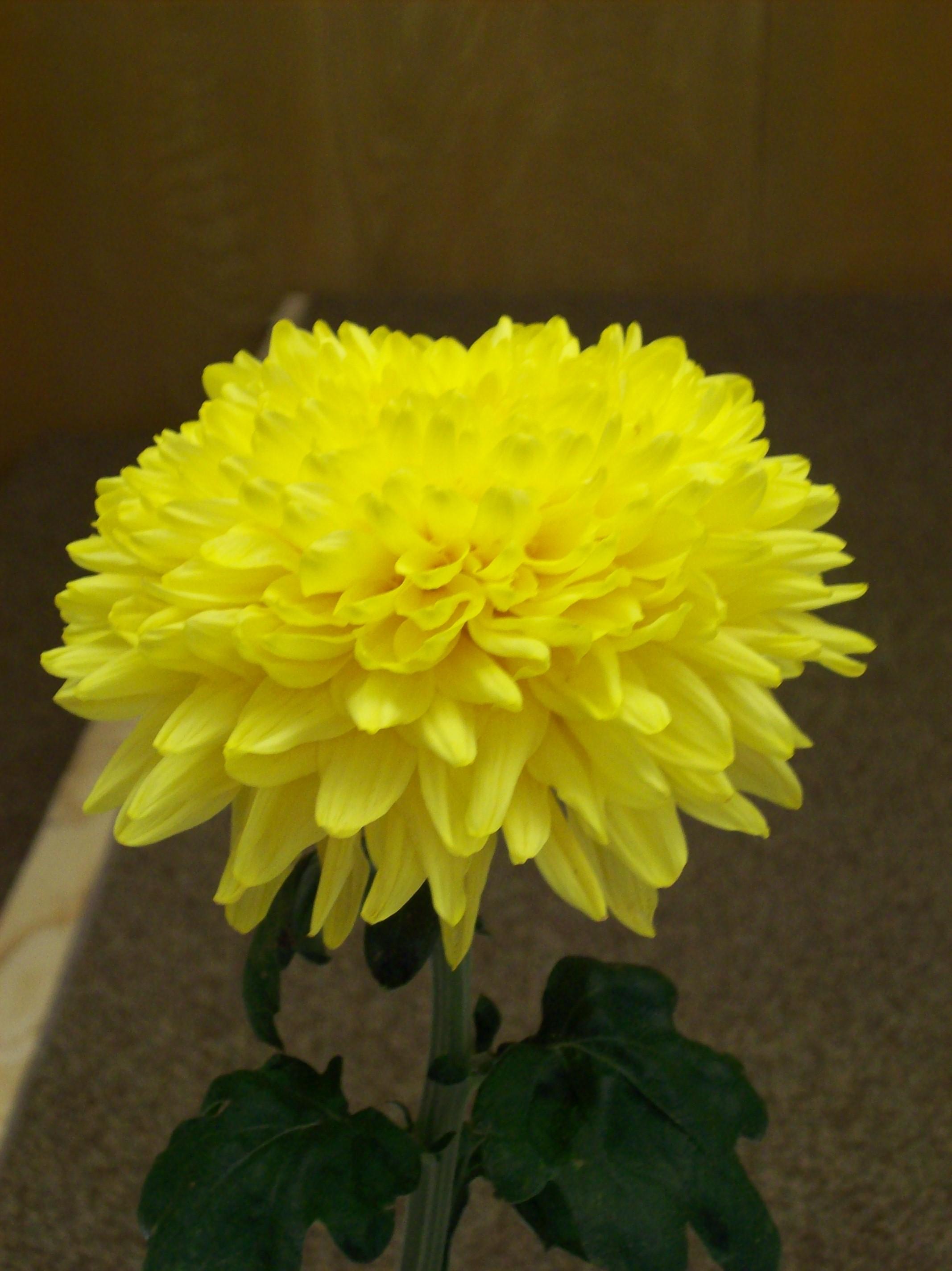 Bright Golden Anne