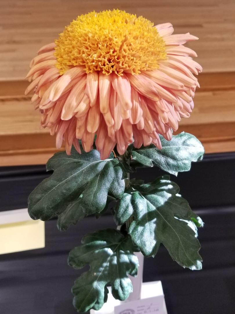 Best Anemone, Daybreak, by Jeff MacDonald