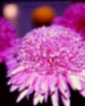 Purple Light 1 (2).JPG