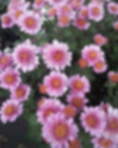 Pink Fleece 1.jpg
