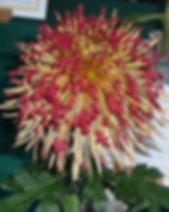 Kiwi Magic 1.jpg