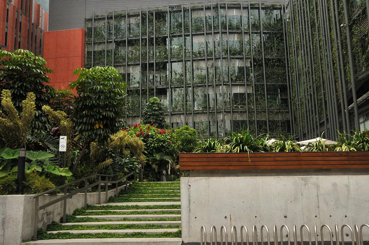 La vegetación impide la entrada de radiación solar y disminuye la temperatura en el lugar.