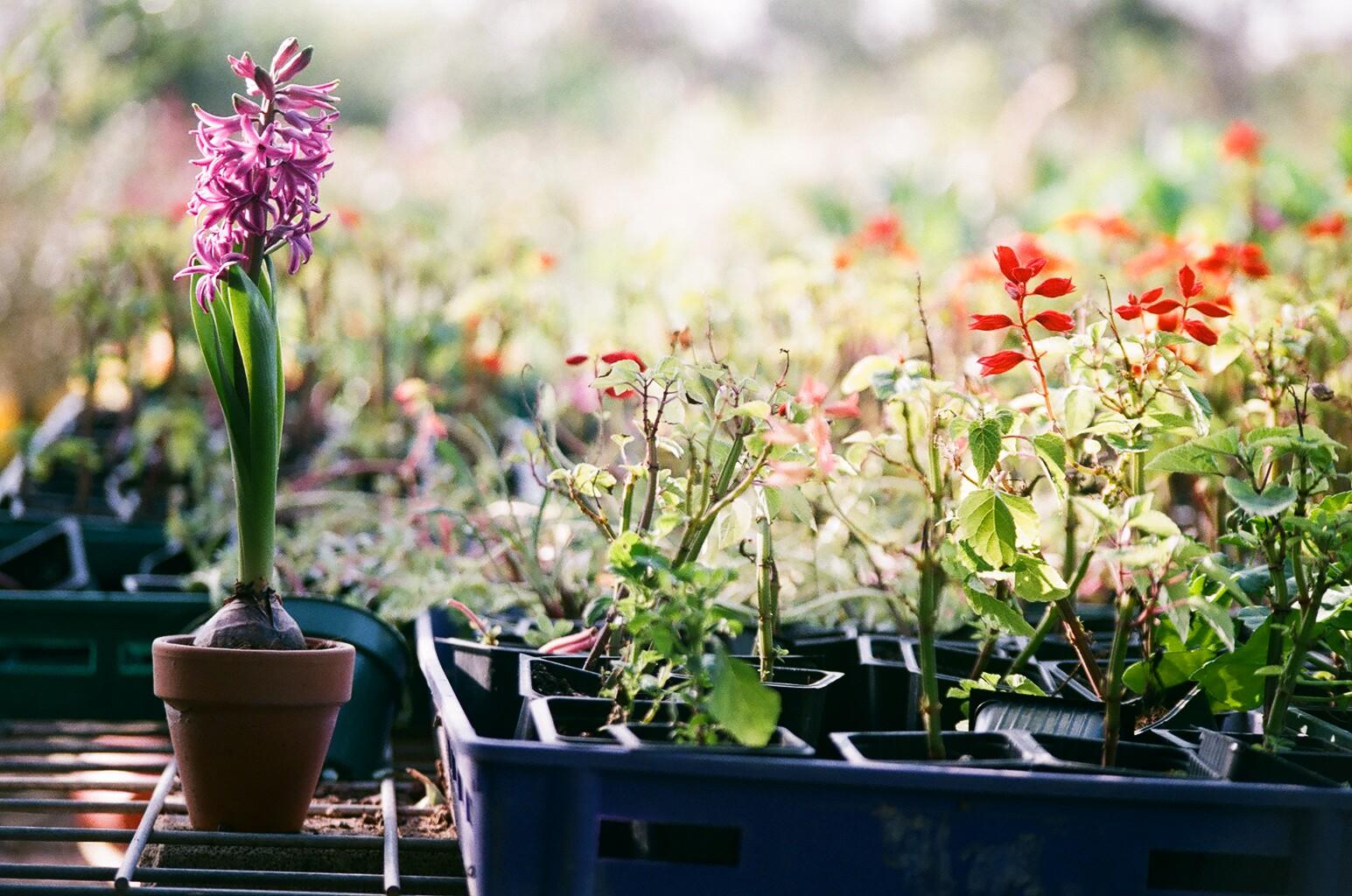 Pflanzen in die Fächer