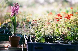Plantes en bacs