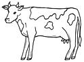 Cow vector.PNG