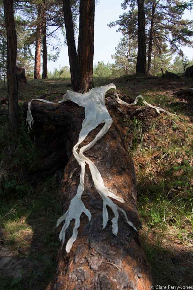 Forest Body on Trunk.jpg