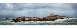 Seal Island, Cape Town