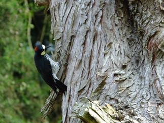 Colombia es primer lugar en especies de aves y orquídeas.