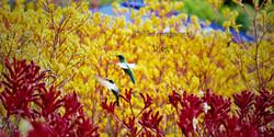 Hummingbirds 31