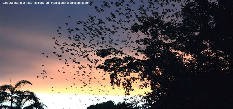 Foto: amazonikos.com