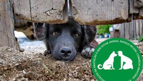 Deputado protocola projeto para conceder título de utilidade pública à Associação de Proteção Animal