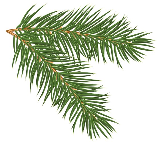 christmas-greenery-clipart-12.png