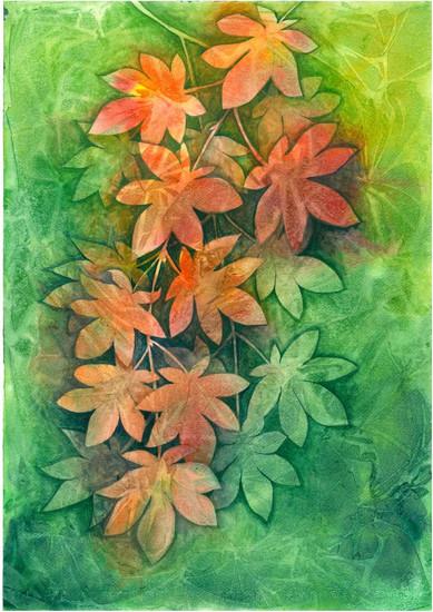 Turning colours - Maple in autumn.jpg