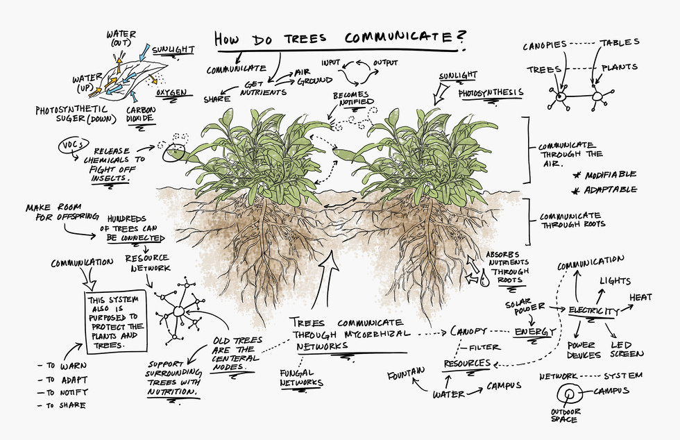 tree communicateSMALL.jpg