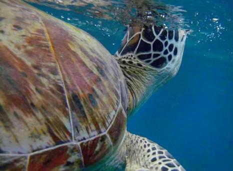 Vermisst du Schildkröten auch so sehr? Get the Indo vibes!