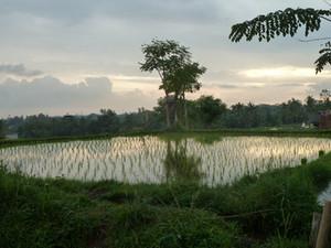 Ubud auf Bali ist noch immer ein spiritueller Ort: eine Handvoll Tipps