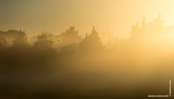 Sunrise_Trees_Silhouette_Photograph_©_Denesa_Chan_Photographer-0674
