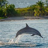 Spinner_Dolphin_Kona_Kailua_Hawaii_Big_I