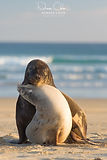 Sea_Lions_Catlins_South_Island_New_Zeala