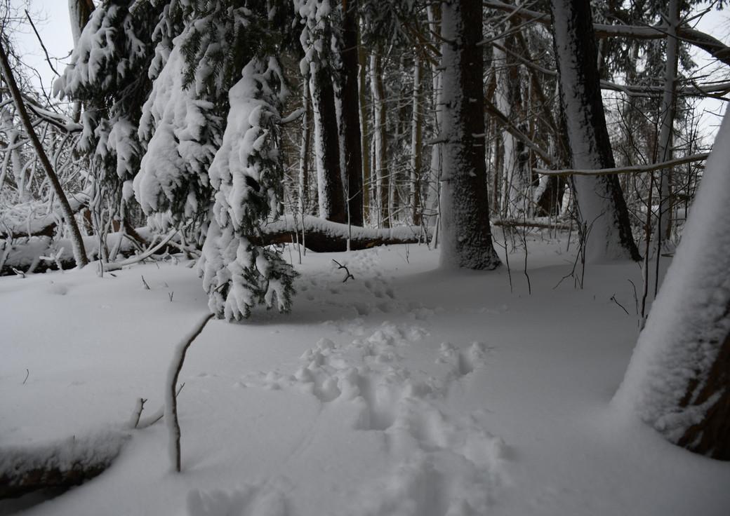 FrontPond.winter.2021-7.jpg