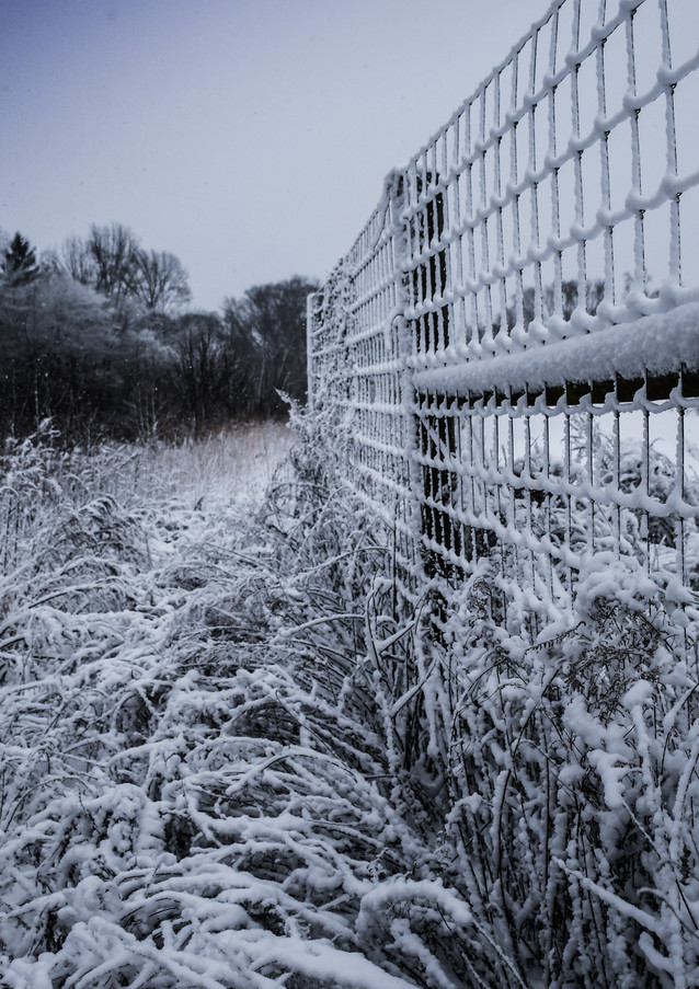 FrontPond.winter.2021-5.jpg
