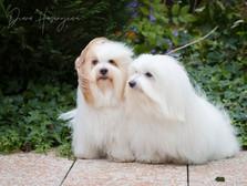 Cookie&Snowy-Oktober2019-31.jpg