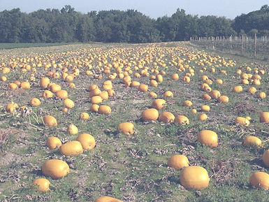 Pumpkin_Patch_59_edited.jpg