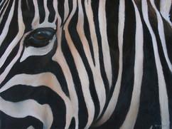Designer Wear - Stripes