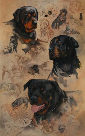 Jenny's Dogs